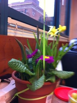 Sari gave me flowers
